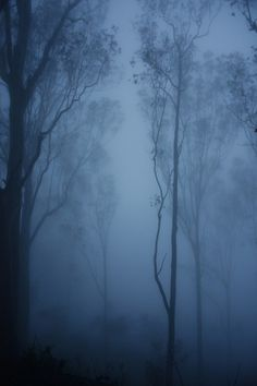 Cargo #fog #forest #photography #trees