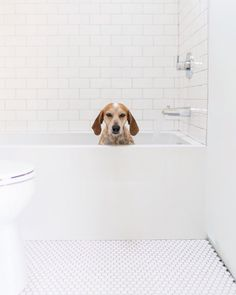 Coonhound in tub. Maddie on Things. © Theron Humphrey. #dog #pet #coonhound