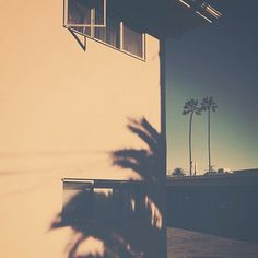 Palm Trees | Flickr - Photo Sharing! #photography #california #instagram #palm trees #b3po