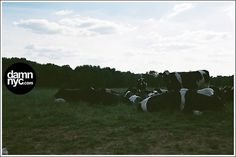damn nyc - pictures #analog #damnnyc #damn #canon #philli #cows #photography #nyc