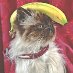 Cargo - Gallery #mixed #media #banana #cat