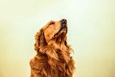 Photography on Behance - Gustavo Angelo #photography #dog