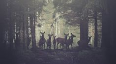 ISO50 Blog – The Blog of Scott Hansen (Tycho / ISO50) » The blog of Scott Hansen (aka ISO50 / Tycho) #vibes #forest #photography #deer