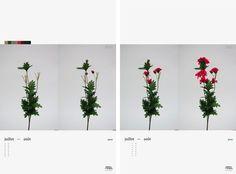 Théâtre de verdure - Nadine Brunet #floral #theatre