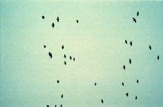 ∆ Birds ∆   Triangular Love.