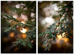 Pine tree #background #tree #in #blur #christmas #pine #light