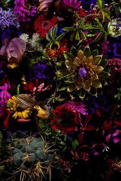 makoto azuma #azuma #makoto #design #nature #flower #colourfull