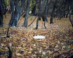 Photography by Ksenia Burnasheva #inspiration #photography