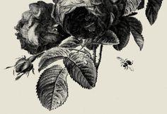 Floral Stamp #stamp #floral