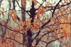 All sizes | TattonWinterLeaves01 | Flickr - Photo Sharing! #winter #landscape #photography #trees #leaves