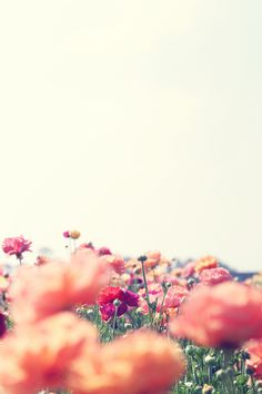 Photo #photography #horizon #depth of field #flowers #image