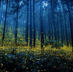 #Fireflies in Japan #YuHashimoto