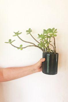 bonsai | Tumblr