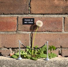 Street Art Interventions by Michael Pederson