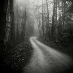 photo #trees