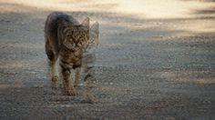 Catwalk #catwalk