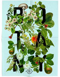 Botany | Listhings #type #illustration #botany #typography