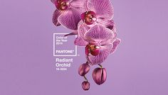 Pantone unveils 2014 color of the year | Webdesigner Depot #orchid #pantone #flowers