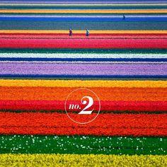 1257917284FCL4Mum.jpg 900×900 pixels #flowers