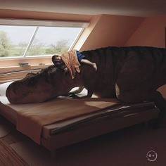 Domestic Friend by Orimat. #dinosaur #photoshop #photomanipulation #designbyorimat