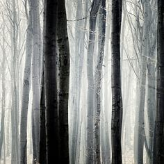 Through the Trees #threes #forest #photography