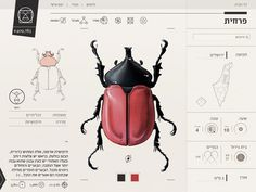 Insect Definer on Behance #bug #web