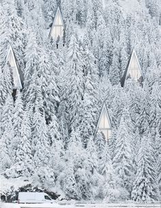 Capture #white #forrest #living #snow #wood #architecture #future #prism
