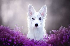 Beautiful Dog Portraits by Alicja Zmyslowska