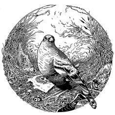tim mcdonagh #tim #mcdonagh #bird