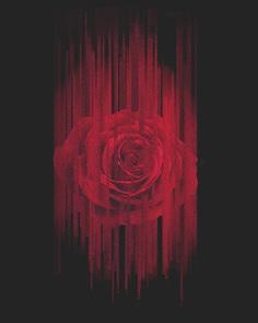Glitch City #glitch #glitchart #rose #rosecity #portland #pdx #dnlkrgr #dannymaker