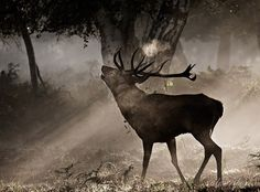 Nature Photography by Alex Saberi #inspiration #photography #nature