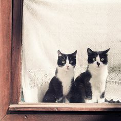 '10 Uhr morgens, Stammplatz, Fensterbank' ein Foto von 'Flügelfrei' #waiting #two #cats #window #pair #animal