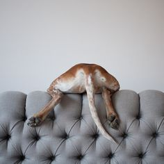 THIS WILD IDEA #couch #photo #maddie #dog