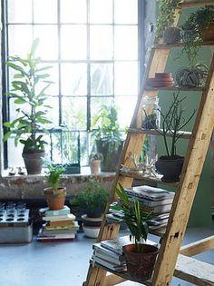 Siren Lauvdal Palookaville #succulents