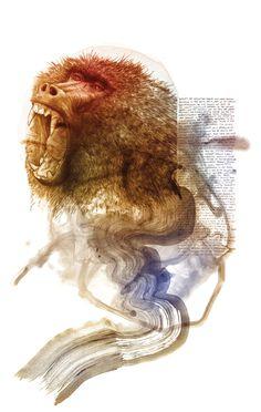 #monkey #illustration