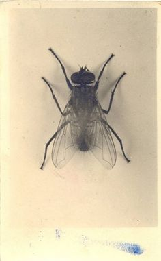 DeadFix #mosquito