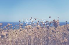 SNWOjavascript:void(0); #field #sky #reality #landscape #photography #thistles #graphics #flowers #typography