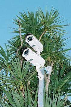 Oui #palm