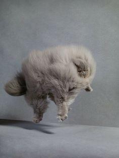 PATTERNITY_FUZZY FELINE FALLING_dan burn forti #cats