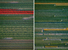 The Tulip Series: The Netherlands From Above by Tom Hegen