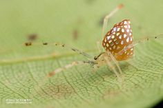 Nicky Bay Captures the Beauty and Diversity of Mirror Spiders