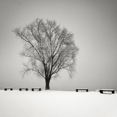 Black and White Landscapes by Pierre Pellegrini #white #black #landscape #photography #and
