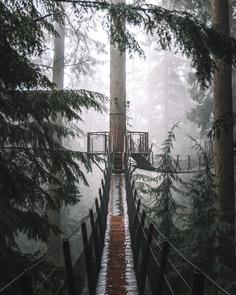 Suspension Bridge By trystane