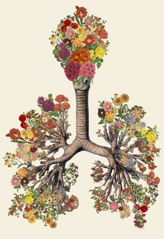Anatomical Collages by Travis BedelMarch 14 #illustration #collage #anatomy #art