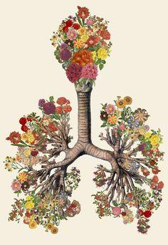Anatomical Collages by Travis BedelMarch 14 #illustration #collage #anatomy #art