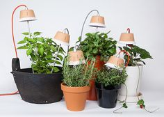 Support potted plants with LED light and grow vegetables indoors in a way you never have before. #lifestyle #design #home #product #industrial