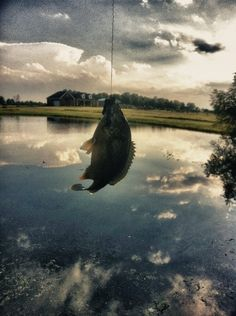 Jack O'Callaghan Justjackdesign #old #just #outdoors #fish #photography #com #jack #justjackdesign #fishing