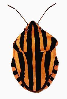 Cornelia Hesse-Honegger #cornelia #bug #insect #nuclear #honegger #hesse