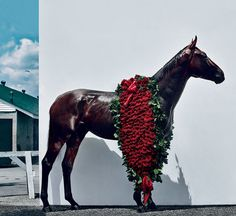 horse-american-pharoah-triple-crown-winner.jpg (780×716) American Pharoah near his stables at Churchill Downs in Louisville, Kentucky Phot