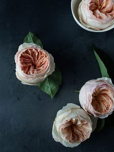 lingered upon: Rose Studies #roses #photography #flowers